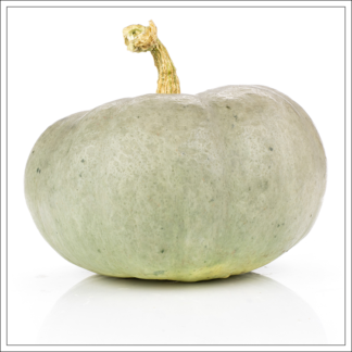 Courges ancestrales